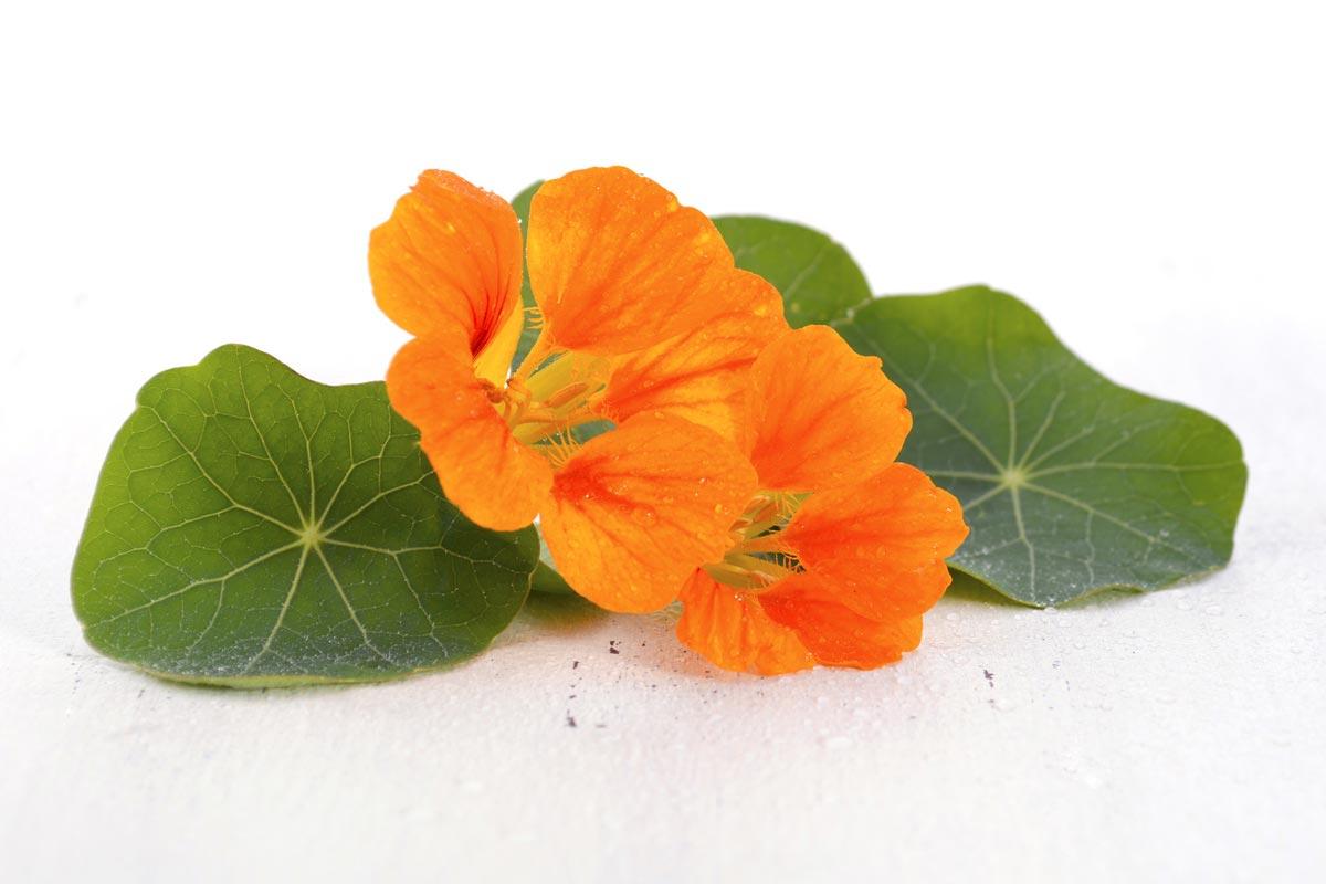 Kapucínka - táto mimochodom veľmi chutná jedlá rastlina vie výrazne zlepšiť kvalitu našej vlasovej pokožky.