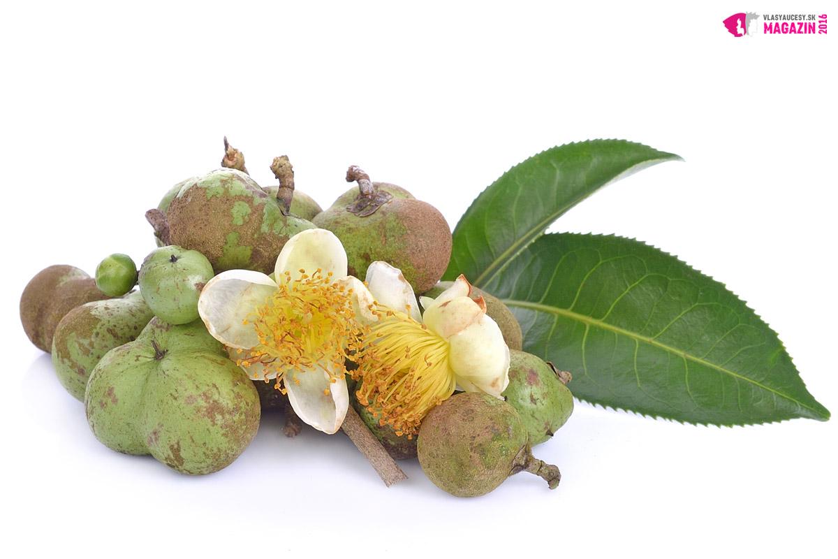 Tea tree olej sa získava z listov kajeputu striedavolistého (lat. Melaleuca alternifolia), ktorý rastie na severovýchodnom pobreží štátu Nový Južný Wales v Austrálii.